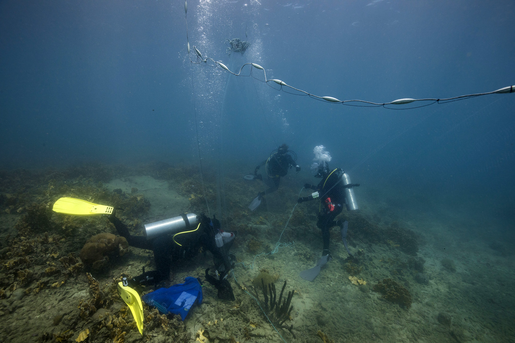 Déploiement et installation du grand filet de fond (2). Santa Marta, Octobre 2018 © Olivier Borde. Explorations de Monaco.