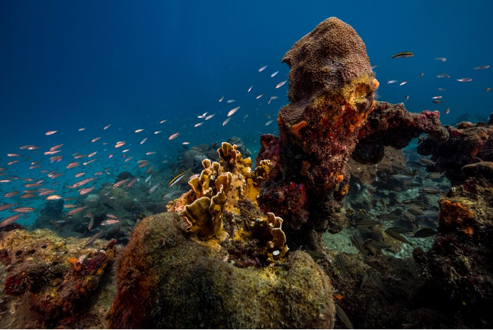 Récifs coralliens – Santa Marta, Colombie © O. Borde Monaco Explorations.
