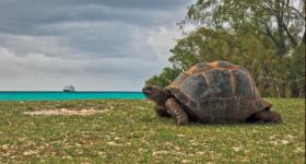 Filip Kulisev Amazing planet Aldabra, Seychelles Island