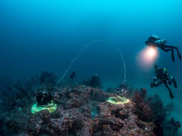 An opaque (left) and a transparent (right) benthic chamber are placed on a coralligenous massif to measure gas exchanges. Laurent Ballesta - Andromeda Oceanology.