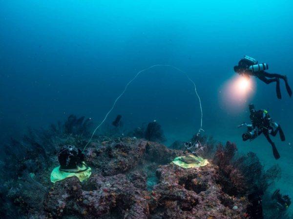 Une chambre benthique opaque (à gauche) et une transparente (à droite) sont posées sur un massif coralligène pour y mesurer les échanges gazeux. ©Laurent Ballesta – Andromède Océanologie.